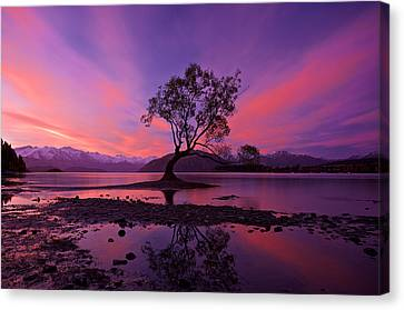 Wanaka Tree Canvas Print
