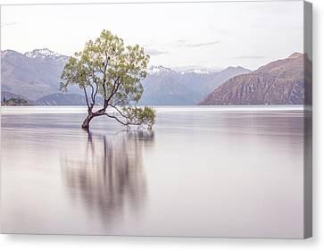 Wanaka Tree Canvas Print
