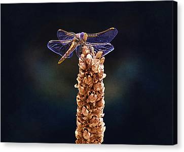 Dragonfly Eyes Canvas Print - Wandering Glider Dragonfly by Steven Michael