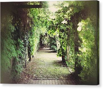 Canvas Print featuring the photograph Wandering by Karen Stahlros