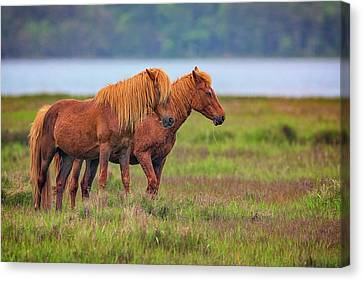 Wandering The Marsh Canvas Print by Rick Berk