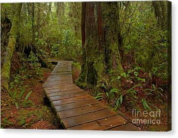 Wandering Through The Rainforest Canvas Print by Adam Jewell