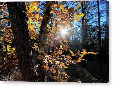 Waning Autumn Canvas Print by Gary Kaylor