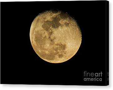 Waning Gibbous Canvas Print by David Bearden