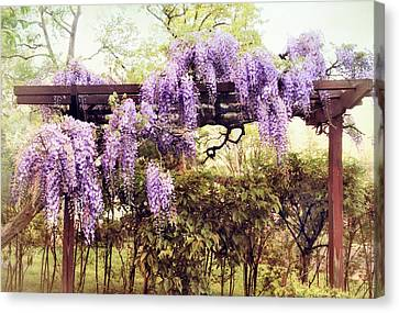 Waning Wisteria Canvas Print by Jessica Jenney