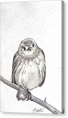 Warbler Canvas Print