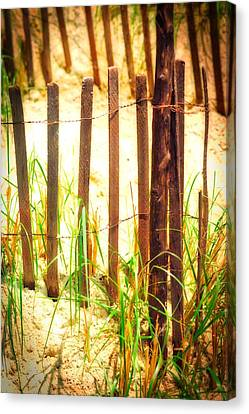 Beachgrass Canvas Print by Ronald Watkins