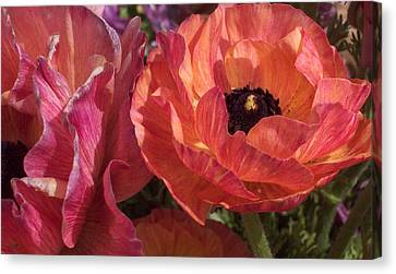 Warm Flower Friends Canvas Print by Jean Booth