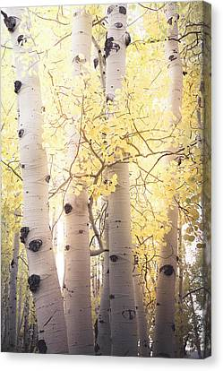 Canvas Print featuring the photograph Warm Gold by The Forests Edge Photography - Diane Sandoval