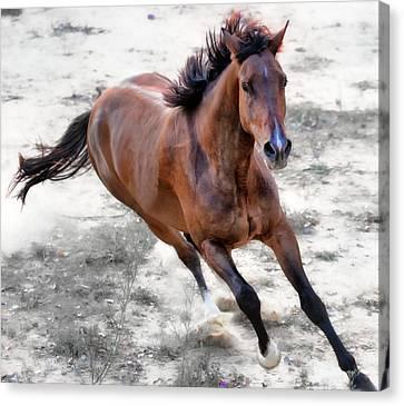 Warmblood Horse Galloping Canvas Print by Vanessa Mylett