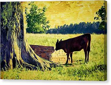 Warming Up In The Morning Glow Canvas Print by Jan Amiss Photography