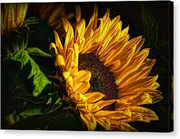 Canvas Print featuring the photograph Warmth Of The Sunflower by Michael Hope