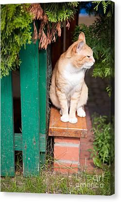 Wary Stray Waif Cat Sitting Canvas Print by Arletta Cwalina