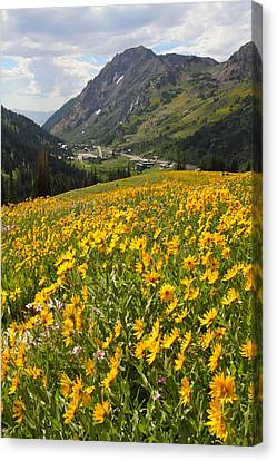No People Canvas Print - Wasatch Wildflowers by Brett Pelletier