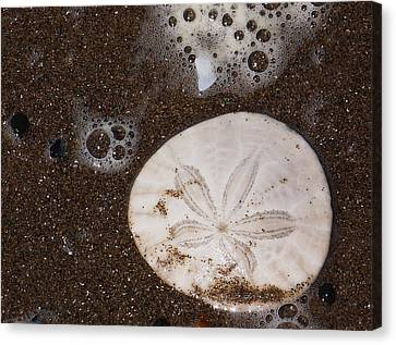Canvas Print featuring the photograph Washed Up by Angi Parks