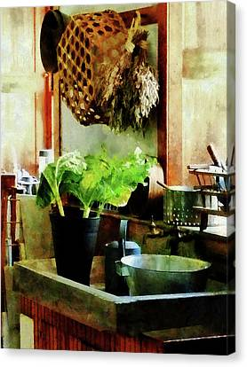 Washing Garden Greens Canvas Print by Susan Savad