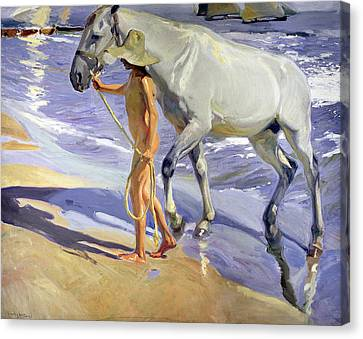 Washing The Horse Canvas Print by Joaquin Sorolla y Bastida