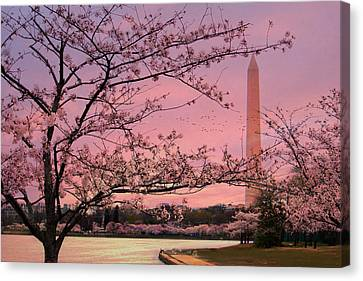 Canvas Print featuring the photograph Washington Monument Cherry Blossom Festival by Shelley Neff