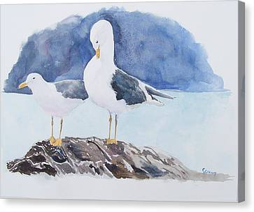 Washington - Two Gulls Canvas Print