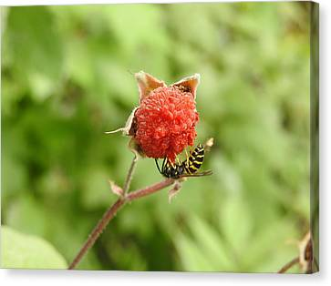 Wasp And Berry Canvas Print
