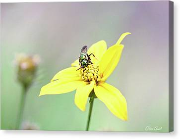 Canvas Print featuring the photograph Wasp On Coreopsis by Trina Ansel