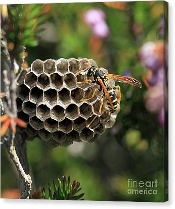 Wasp Canvas Print by Stephan Grixti