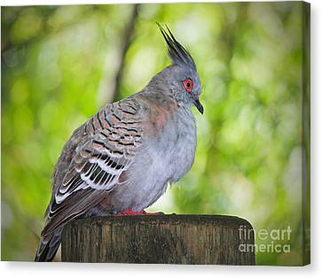 Watchful Eye Canvas Print by Judy Kay