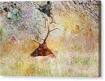 Canvas Print featuring the photograph Watchful Eye by Robert Pearson