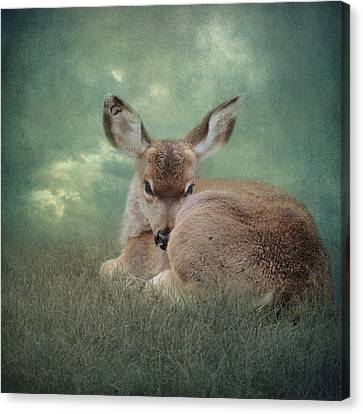 Canvas Print featuring the photograph Watchful Eye by Sally Banfill