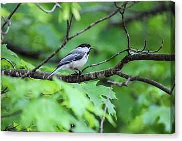 Watchful Perch Canvas Print
