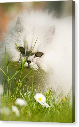 Watching Daisies Canvas Print by Ian Merton