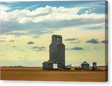 Watching O'er The Plains Canvas Print