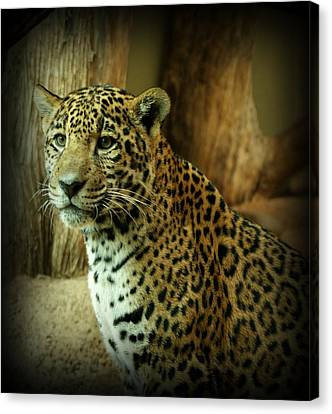Evansville Canvas Print - Watching by Sandy Keeton