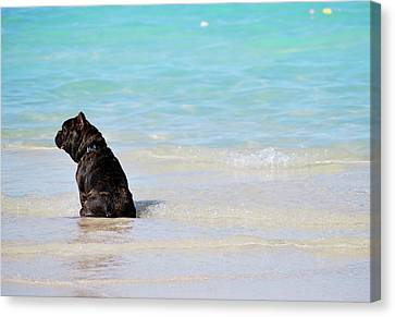 Canvas Print featuring the photograph Watching The Waves by Amee Cave