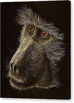 Canvas Print featuring the drawing Watching You by Heidi Kriel