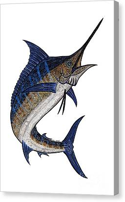 Water Color Tribal Marlin IIi Canvas Print by Carol Lynne