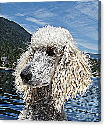 Water Dog Canvas Print by Joey Nash