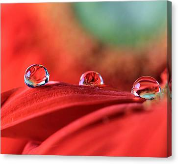 Water Drop Reflections Canvas Print