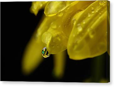 Water Drop Reflections Canvas Print by Laura Mountainspring