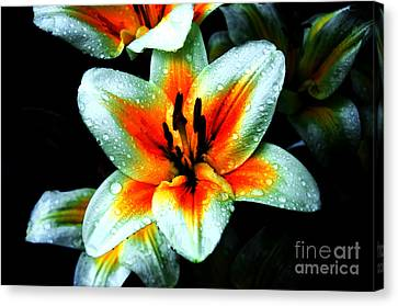Water Droplet Covered White Lily  Canvas Print by Andee Design