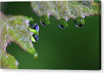 Water Droplet IIi Canvas Print by Richard Rizzo