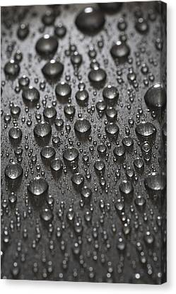 Water Drops Canvas Print by Frank Tschakert