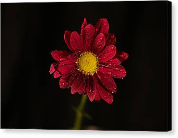 Canvas Print featuring the photograph Water Drops On A Flower by Jeff Swan
