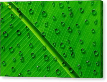 Canvas Print featuring the painting Water Drops On Palm Leaf by Georgeta Blanaru