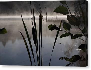Water Fairies Canvas Print