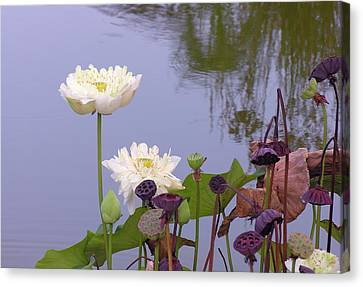 Water Flowers Canvas Print by Jim Justinick