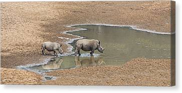 Water For Rhinos Canvas Print by Stephen Stookey