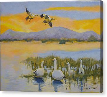 Water Fowl, Sutter Buttes Canvas Print
