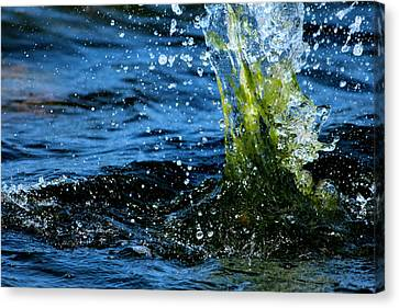 Water Games Canvas Print by Heike Hultsch