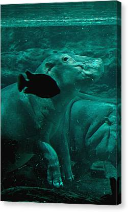 Water Horse Ballet Canvas Print by DigiArt Diaries by Vicky B Fuller